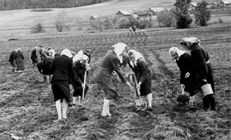 Выращивание кукурузы в ссср 62